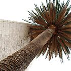 Palm Tree Near Church Wall by nadinecreates