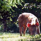 happy pig by elasita