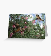 The Honey-eaters Greeting Card