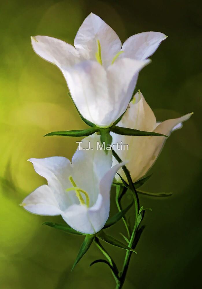 Peach-Leaved Bellflower by T.J. Martin