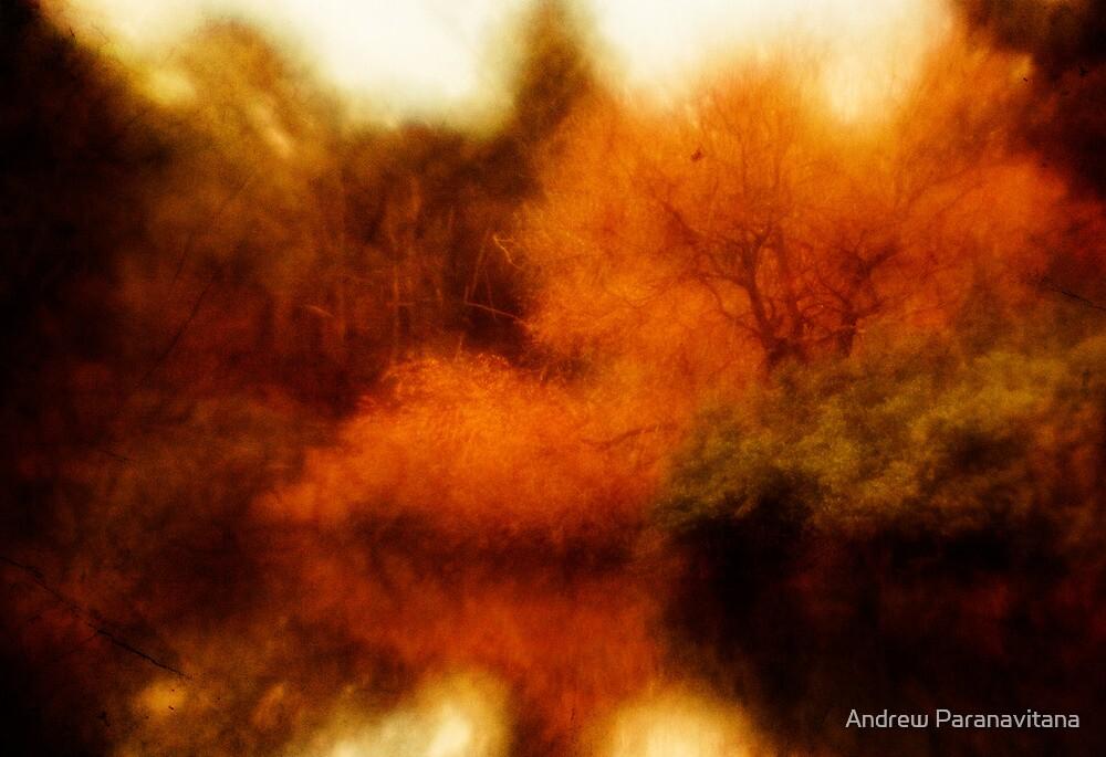 Opium by Andrew Paranavitana