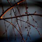 Dark Blue by Courtney Tomey