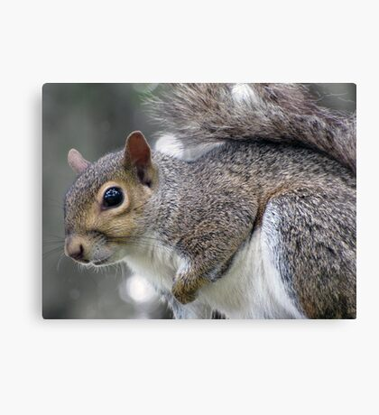 Sweet Lil' Squirrel Canvas Print
