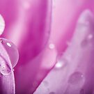 Droplets on Purple Petals by EthanQuin