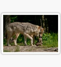 Timber Wolf And Pup Sticker