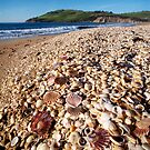 Clifton Beach Shells by Mike Calder
