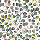 Simple Silver Dollar Eucalyptus Leaves by micklyn