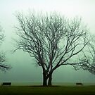 One foggy morning by Sangeeta