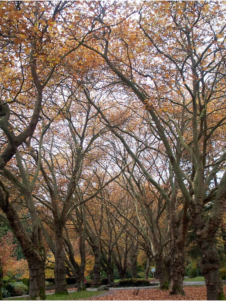 Faded canopy, Vancouver, Canada, 2007 by chrisculy