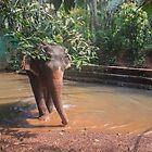 «Elefante indio» de Svetlana Korneliuk
