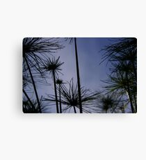 Field of Line Canvas Print