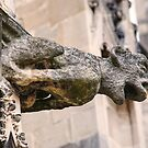 A water spout gargoyle - at Canterbury, Kent , England by Kent Burton