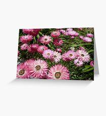 Paper daisy - Kings Park Perth Western Australia Greeting Card