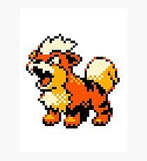 Pokemon - Growlithe Photographic Print