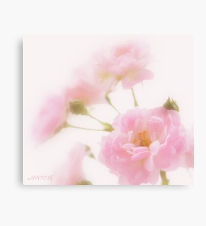 Rose collection 1 Canvas Print