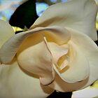 «Rosa sensual» de ♥⊱ B. Randi Bailey