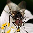 Pollen by Gareth Jones