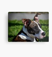 Swagger Metal Print