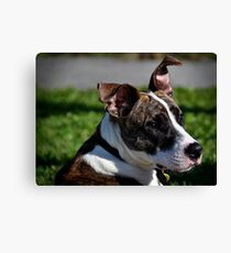 Swagger Canvas Print