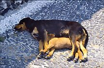 Let Sleeping Dogs Lie by David Davies