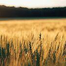 In the Field by AbigailJoy