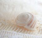 Seashell 1 by aMOONy