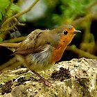 Robin - eine schöne Ruhe! von Photography  by Mathilde