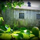 Chicken Coop thru Pear Tree by Debbie Robbins