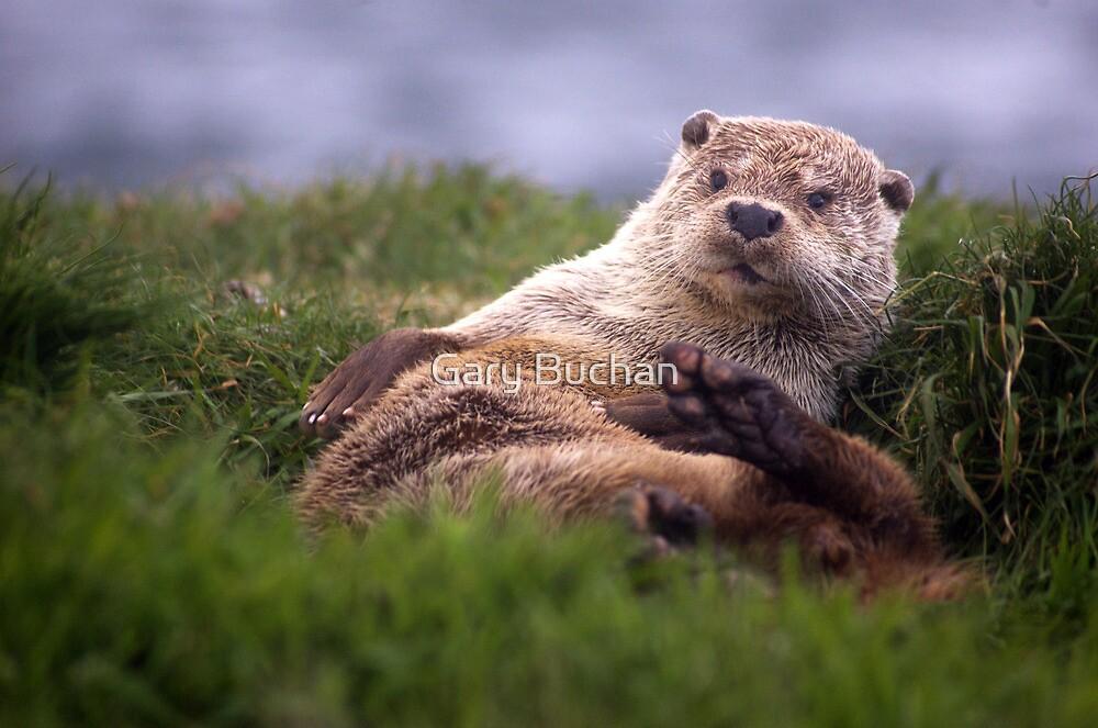 Otter Time II by Gary Buchan
