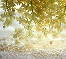 Grandma's lace by aMOONy