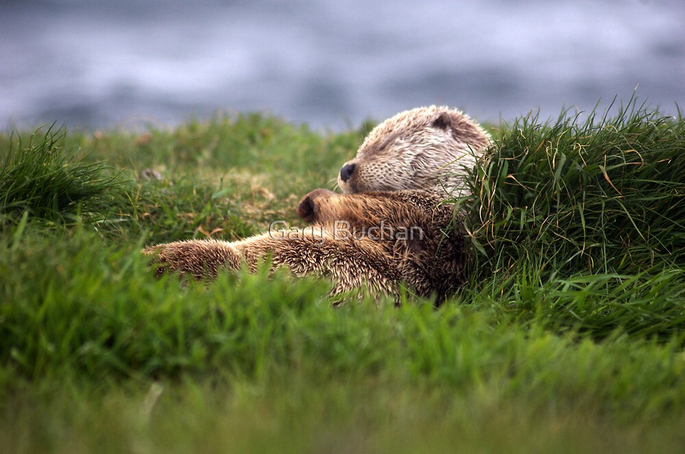 Sleepy Time by Gary Buchan