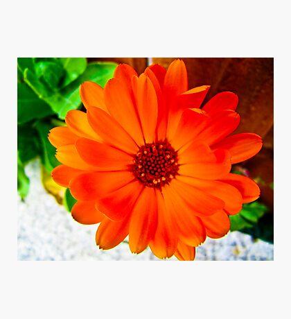Orange Burst! Photographic Print