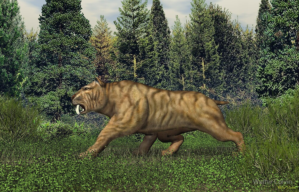 Quot Smilodon Saber Tooth Tiger Quot By Walter Colvin Redbubble