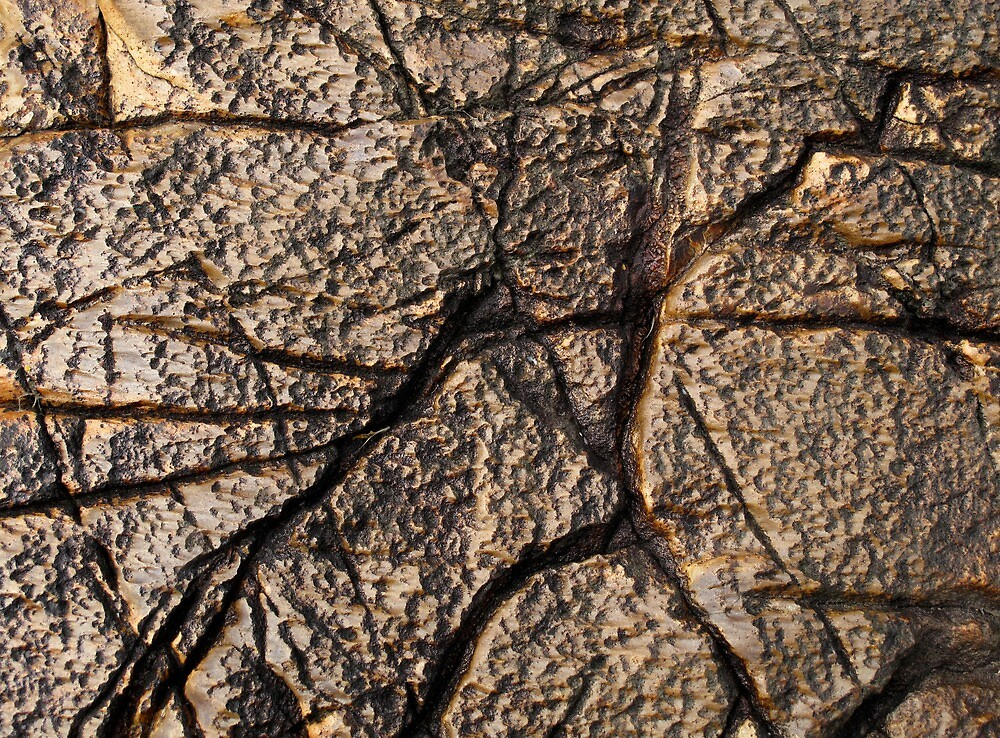 Rock Art I by Reef Ecoimages