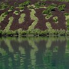 Green on Basalt by Reef Ecoimages