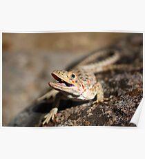 Desert Iguana Poster