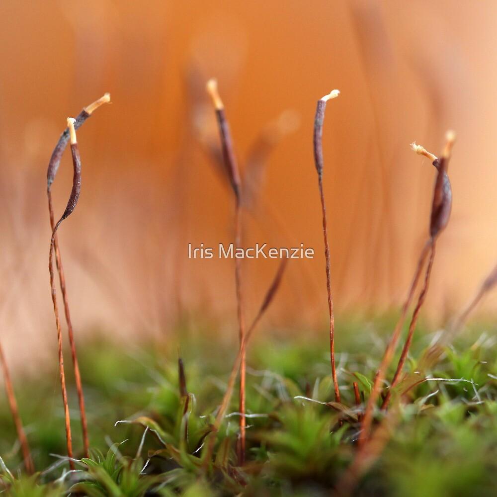 autumn moss dance by Iris MacKenzie
