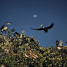 Pelican Moon by Xcarguy