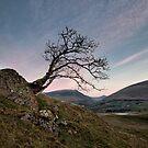 Tewet Lone Tree Sunrise by Phil Buckle