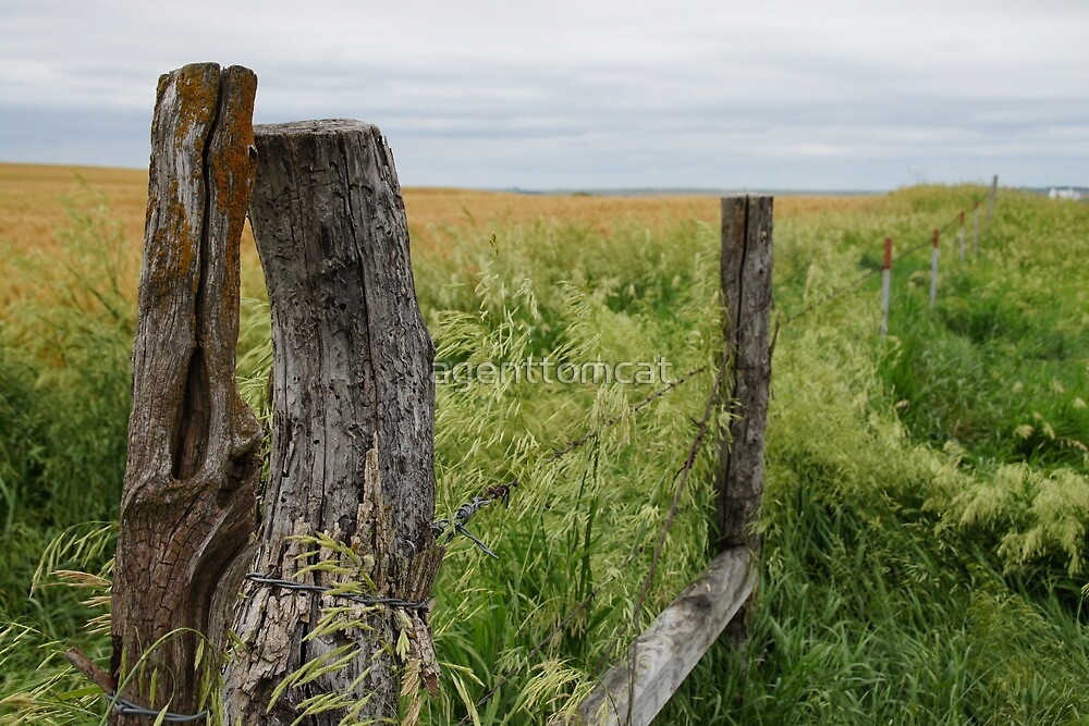 Fence receding in front of a field. by agenttomcat