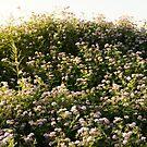 A short hill of flowers by agenttomcat