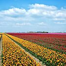 Tulip time in the Netherlands (2) by Adri  Padmos