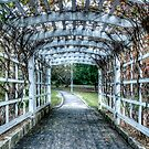 Entwine - Wahroonga Park (Colour) by Jason Ruth
