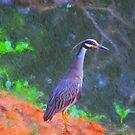 Yellow-Crowned Night-Heron by DottieDees
