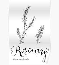 Rosemary - art print Poster