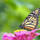 Monarchfalter von FrankieCat