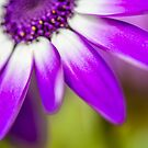 Purple Petals by Dave Hare