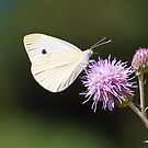 CABBAGE BUTTERFLY by RGHunt