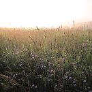 Summer Morning  by teresa731