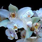 Eine weiße Orchideenhochzeit von Michael May